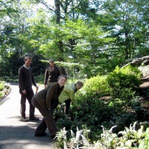 Azalea Garden New York Botanic Garden